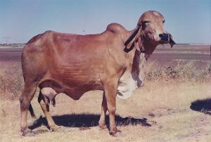 Bagli - 25kg /24hrs