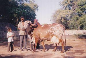 Lakhen - 25kg 350gms/24hrs