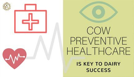 Dairy Cow Health Problems Prevention