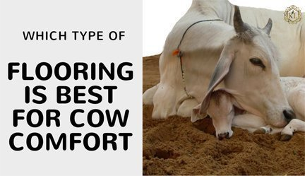 best-flooring-cow-comfort