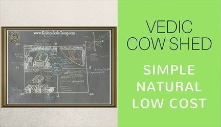 Vedic Cowshed Program