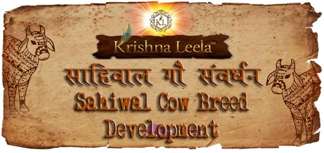 Sahiwal Cow Breed