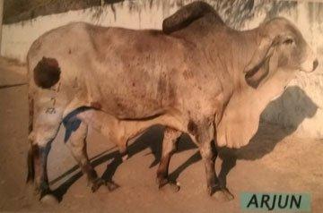 Arjun - Pradeepsing