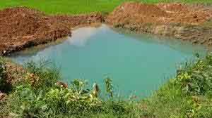 natural-pond2