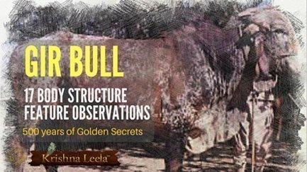 Gir-bull-observation