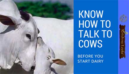 Know How to Talk to Cows