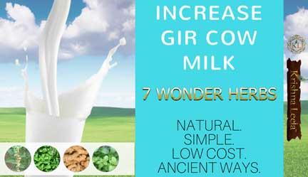 Increase Gir Cow Milk Naturally