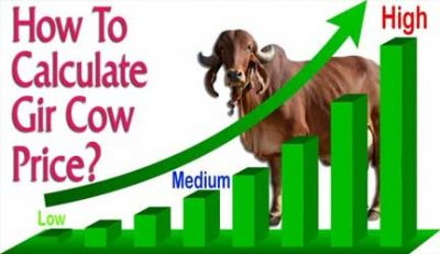 Gir Cow Price Calculator