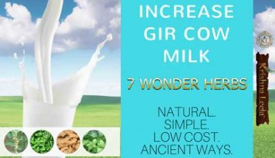 7 Vedic Herbs to Increase Gir Cow Milk Naturally