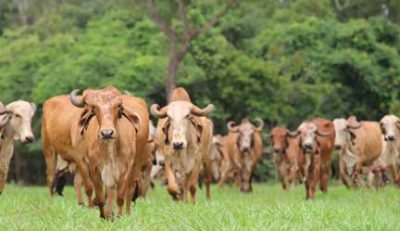 Vedic Health Mantra for Gir Cow Dairy Farm
