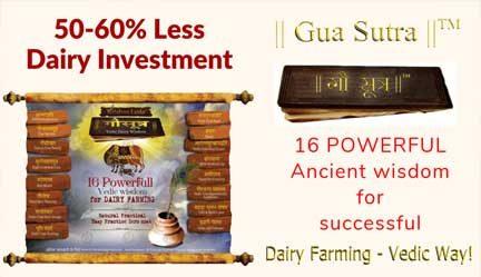 KL ||Gau Sutra||™ – Practical Video Program On Dairy