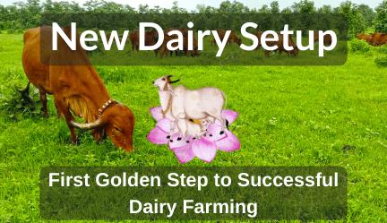 New Dairy Setup